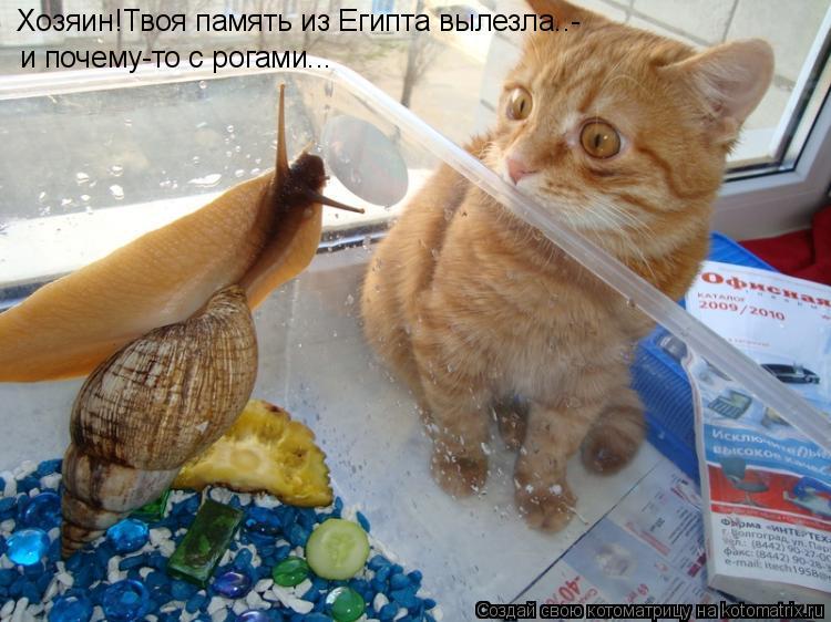 Котоматрица: Хозяин!Твоя память из Египта вылезла..- и почему-то с рогами...