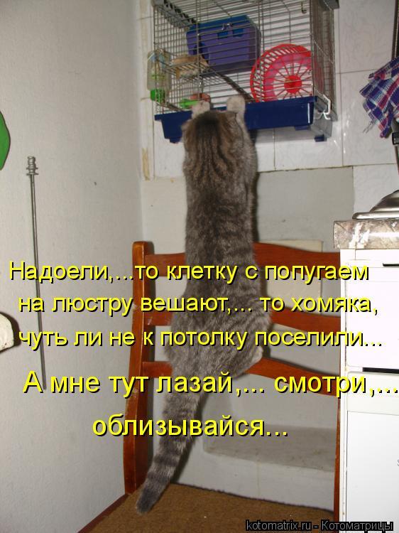 Котоматрица: облизывайся...   А мне тут лазай,... смотри,...   чуть ли не к потолку поселили... на люстру вешают,... то хомяка,  Надоели,…..то клетку с попугаем