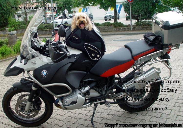 Котоматрица: Ну что может поедем? Или так и будем смотреть На сумашедшую собаку Сидящую в сумку На мотоцикле?