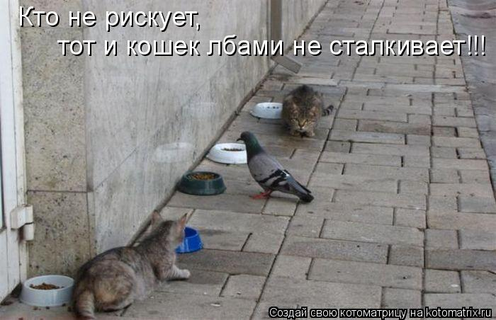 Котоматрица: Кто не рискует,  тот и кошек лбами не сталкивает!!!