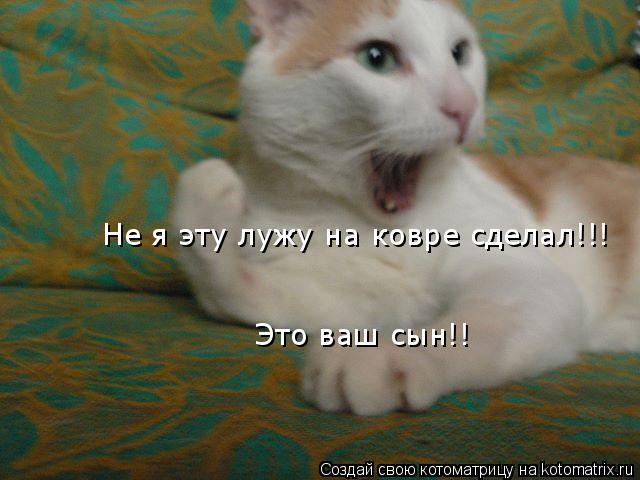 Котоматрица: Не я эту лужу на ковре сделал!!! Это ваш сын!!
