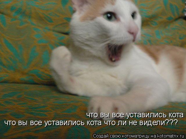 Котоматрица: что вы все уставились кота что ли не видели??? что вы все уставились кота что ли не видели???