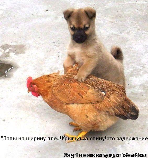 """Котоматрица: """"Лапы на ширину плеч!Крылья за спину!это задержание!"""""""