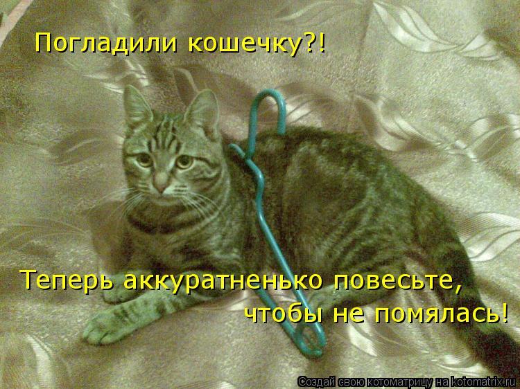 Котоматрица: Погладили кошечку?! Теперь аккуратненько повесьте,  чтобы не помялась!