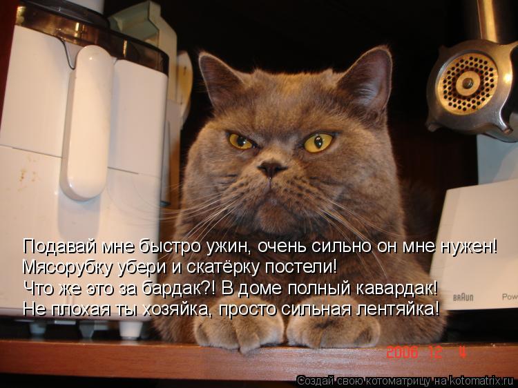Котоматрица: Подавай мне быстро ужин, очень сильно он мне нужен!   Мясорубку убери и скатёрку постели! Что же это за бардак?! В доме полный кавардак! Не пло