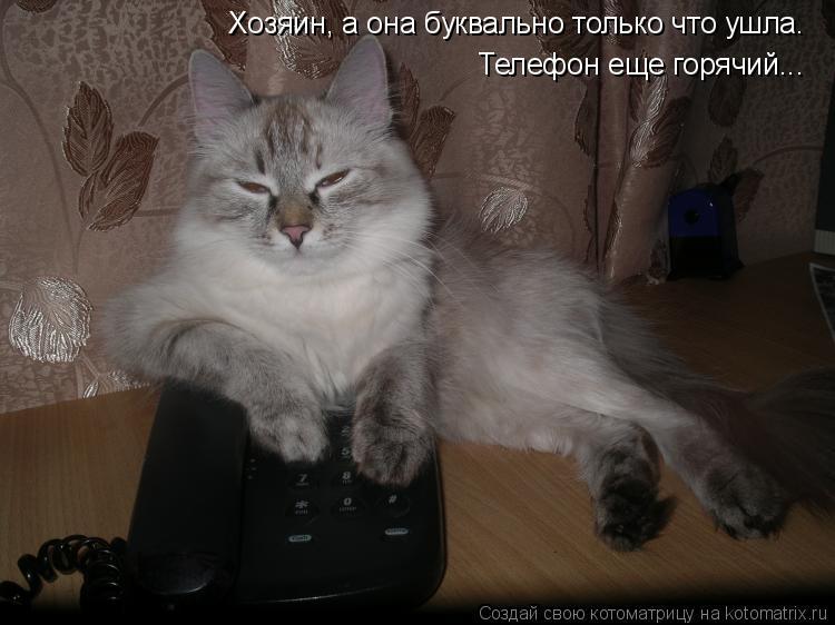 Котоматрица: Хозяин, а она буквально только что ушла.  Телефон еще горячий...