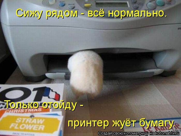 Котоматрица: Сижу рядом - всё нормально. Только отойду -   принтер жуёт бумагу.
