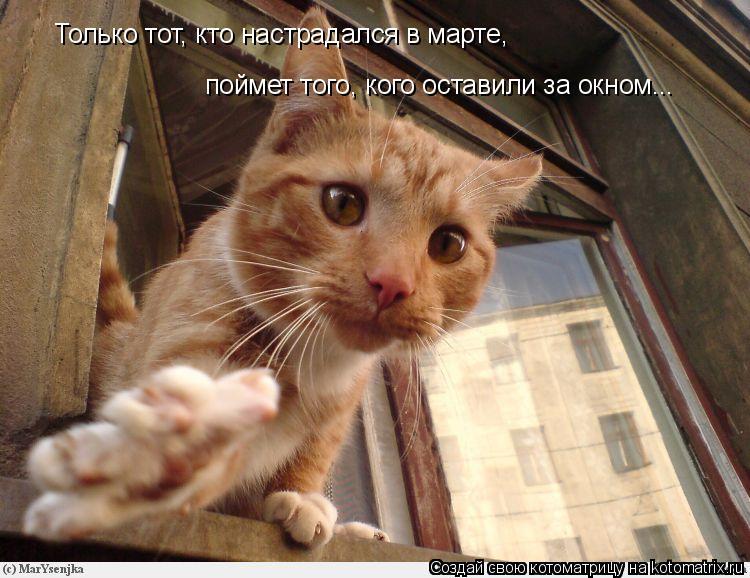 Котоматрица: Только тот, кто настрадался в марте, поймет того, кого оставили за окном...