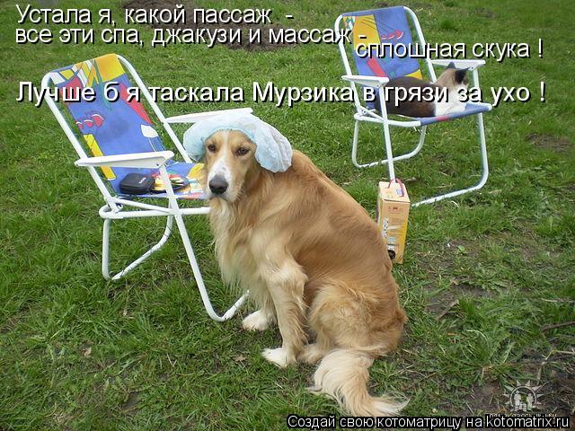 Котоматрица: Устала я, какой пассаж  -  все эти спа, джакузи и массаж -  сплошная скука !  Лучше б я таскала Мурзика в грязи за ухо !