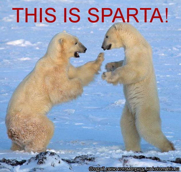 Котоматрица: THIS IS SPARTA!