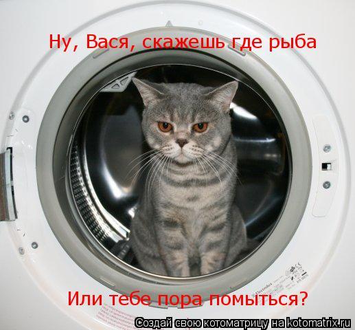 Котоматрица: Ну, Вася, скажешь где рыба Или тебе пора помыться?