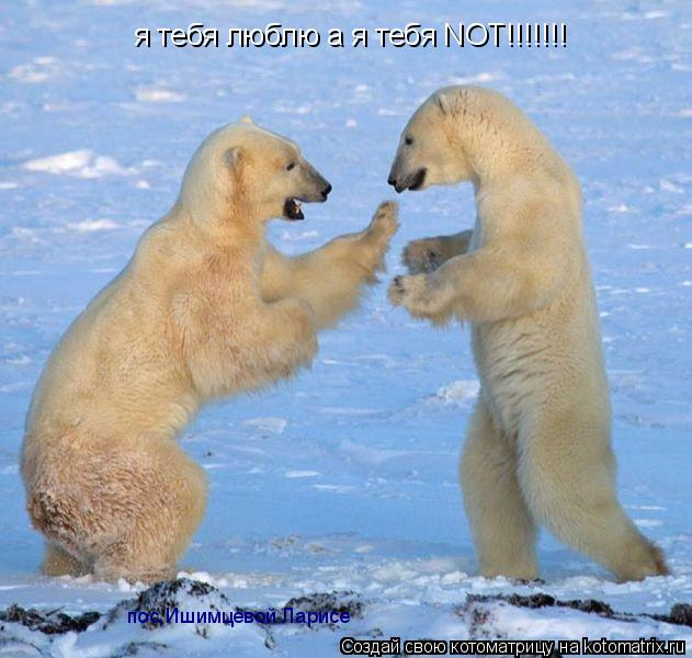 Котоматрица: я тебя люблю а я тебя NOT!!!!!!! пос,Ишимцевой Ларисе