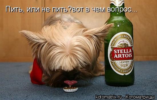 Котоматрица: Пить, или не пить?вот в чем вопрос...