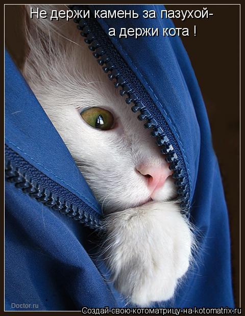 Котоматрица: Не держи камень за пазухой- а держи кота !