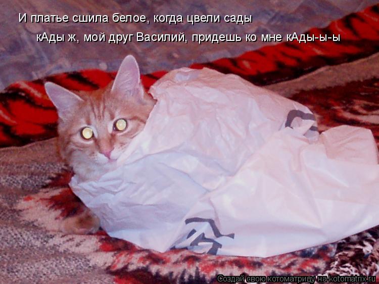 Котоматрица: И платье сшила белое, когда цвели сады кАды ж, мой друг Василий, придешь ко мне кАды-ы-ы