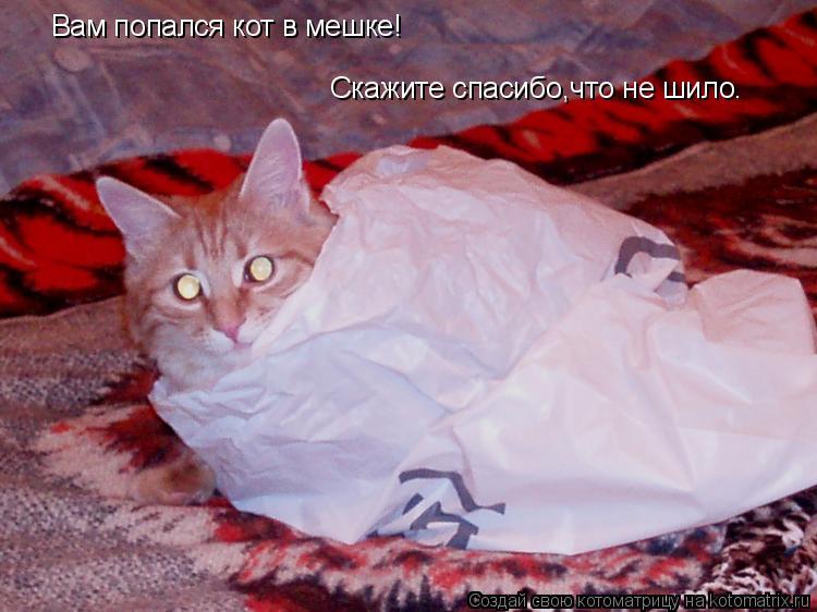 Котоматрица: Вам попался кот в мешке! Скажите спасибо,что не шило.