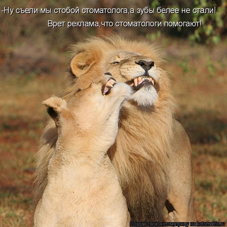 Котоматрица: -Ну съели мы стобой стоматолога,а зубы белее не стали! Врет реклама,что стоматологи помогают!