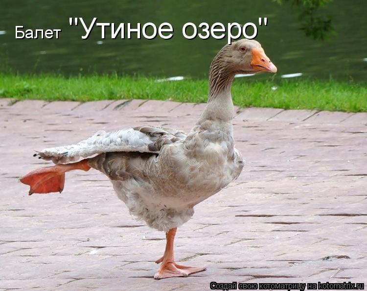 "Котоматрица: Балет ""Утиное озеро"""