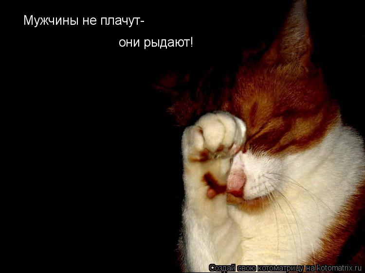 Котоматрица: Мужчины не плачут- они рыдают!