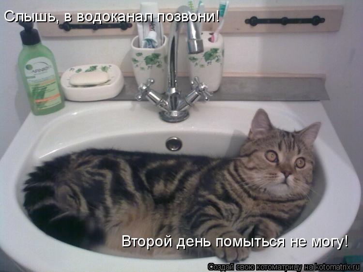 Котоматрица: Слышь, в водоканал позвони! Второй день помыться не могу!