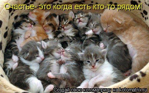 Котоматрица: Счастье- это когда есть кто-то рядом!
