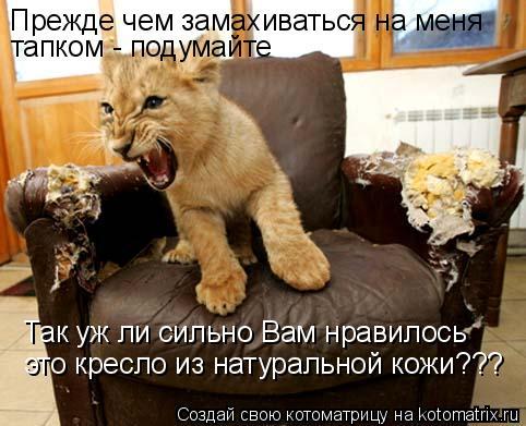 Котоматрица: Прежде чем замахиваться на меня тапком - подумайте Так уж ли сильно Вам нравилось это кресло из натуральной кожи???