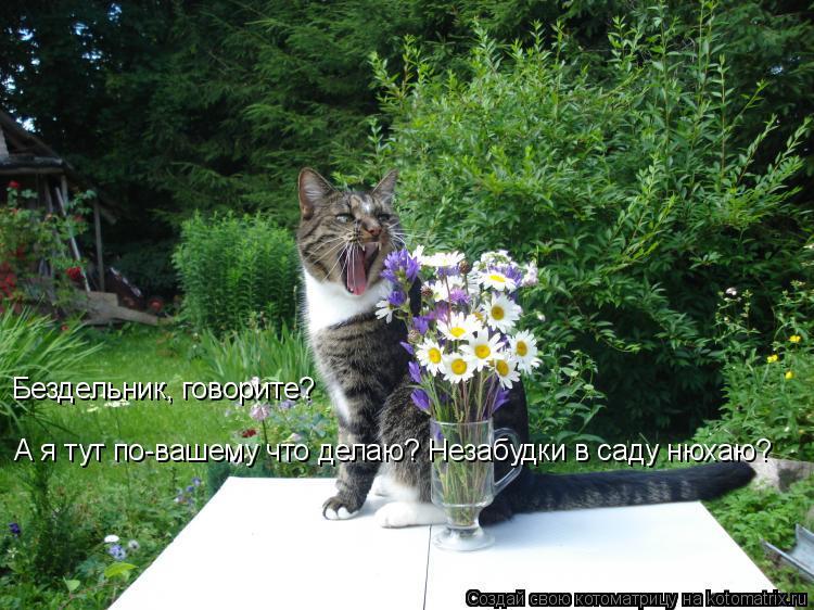 Котоматрица: А я тут по-вашему что делаю? Незабудки в саду нюхаю? Бездельник, говорите?