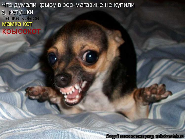 Котоматрица: Что думали крысу в зоо-магазине не купили а, нетушки  папка крыса мамка кот крысокот