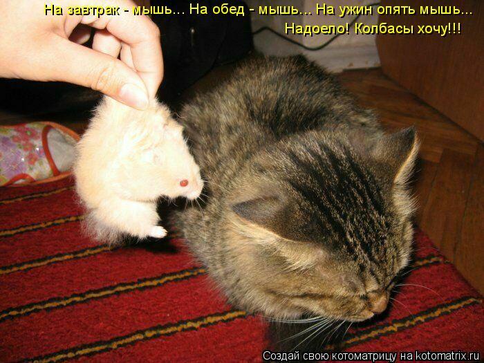 Котоматрица: На завтрак - мышь... На обед - мышь... На ужин опять мышь... Надоело! Колбасы хочу!!!