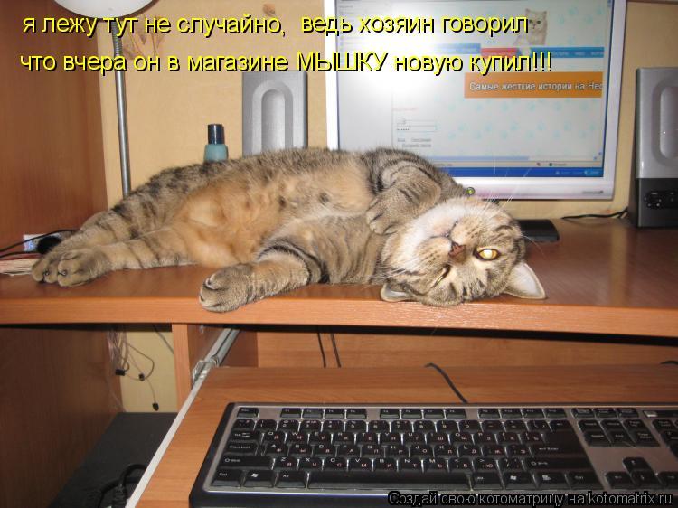 Котоматрица: я лежу тут не случайно, ведь хозяин говорил что вчера он в магазине МЫШКУ новую купил!!!