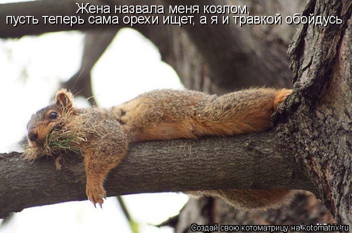 Котоматрица: Жена назвала меня козлом,  пусть теперь сама орехи ищет, а я и травкой обойдусь