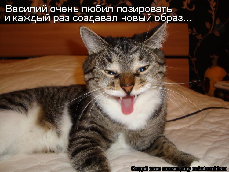 Котоматрица: Василий очень любил позировать и каждый раз создавал новый образ...