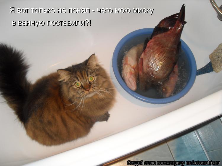 Котоматрица: Я вот только не понял - чего мою миску в ванную поставили?!