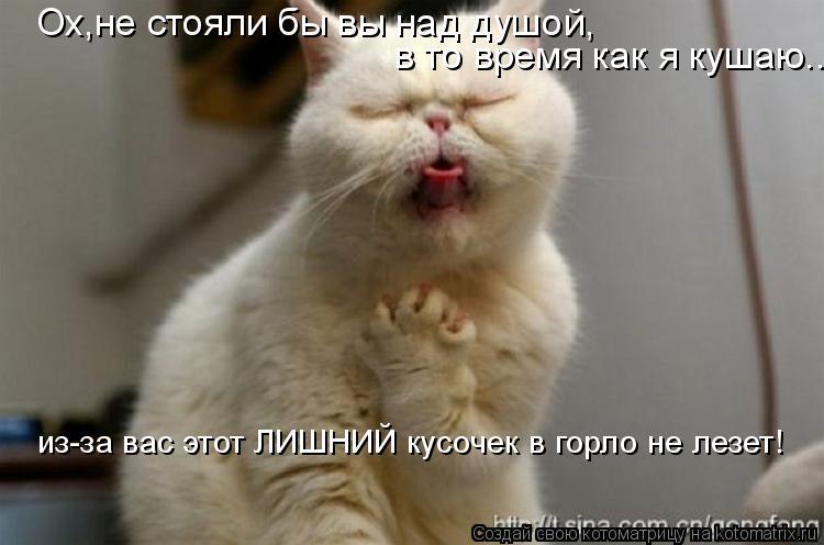 Котоматрица: Ох,не стояли бы вы над душой, в то время как я кушаю... из-за вас этот ЛИШНИЙ кусочек в горло не лезет!