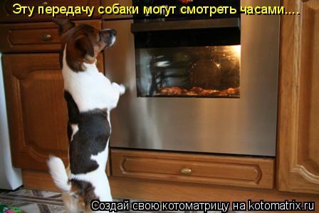 Котоматрица: Эту передачу собаки могут смотреть часами....