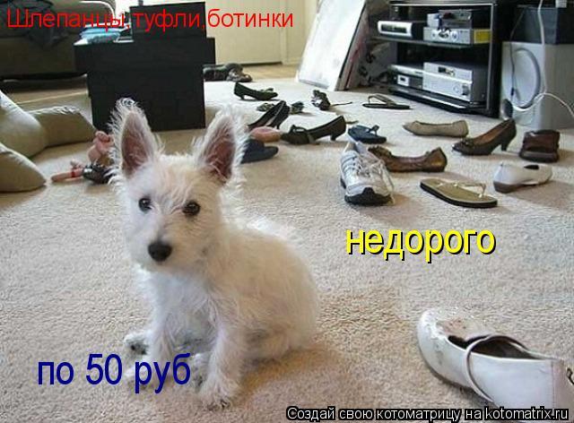 Котоматрица: Шлепанцы,туфли,ботинки недорого по 50 руб