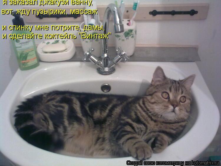 """Котоматрица: я заказал джакузи ванну, вот, жду пузырики, массаж и сделайте коктейль """"Винтаж"""" и спинку мне потрите, дамы,"""