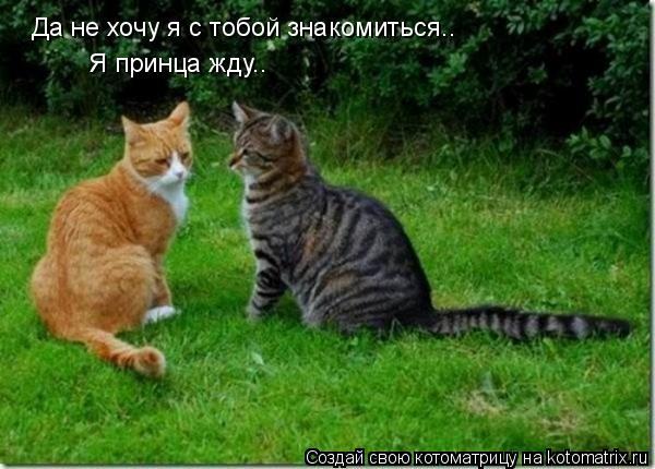 Котоматрица: Да не хочу я с тобой знакомиться.. Я принца жду..