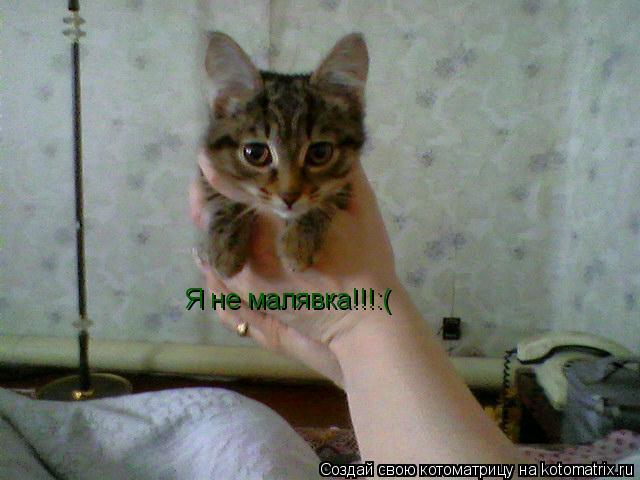 Котоматрица: Я не малявка!!!:(
