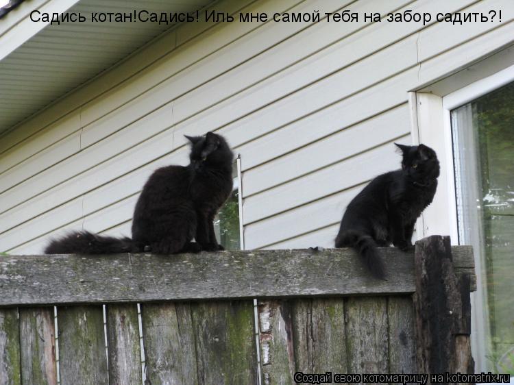 Котоматрица: Садись котан!Садись! Иль мне самой тебя на забор садить?!