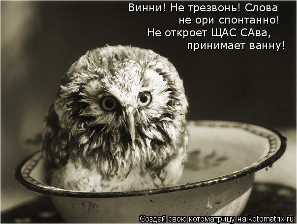 Котоматрица: Винни! Не трезвонь! Слова  Не откроет ЩАС САва, принимает ванну! не ори спонтанно!