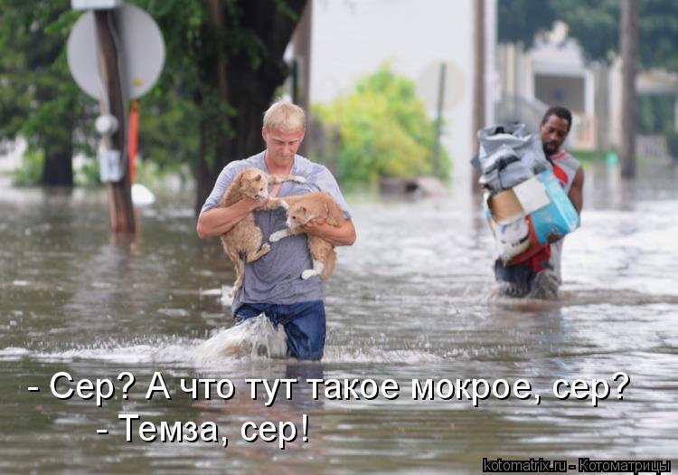 Котоматрица: - Сер? А что тут такое мокрое, сер? - Темза, сер!