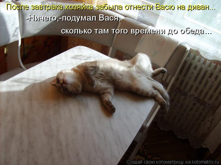 Котоматрица: После завтрака,хозяйка забыла отнести Васю на диван... -Ничего,-подумал Вася, сколько там того времени до обеда...