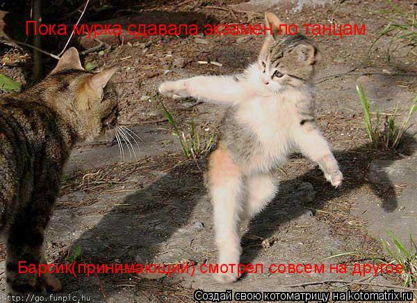 Котоматрица: Пока мурка сдавала экзамен по танцам Барсик(принимающий) смотрел совсем на другое..