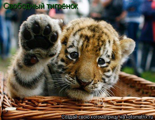 Котоматрица: Свободный тигрёнок