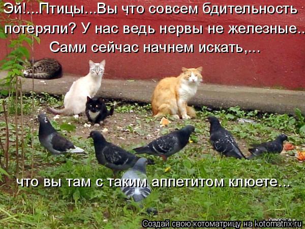 Котоматрица: Эй!...Птицы...Вы что совсем бдительность  потеряли? У нас ведь нервы не железные... Сами сейчас начнем искать,...  что вы там с таким аппетитом кл