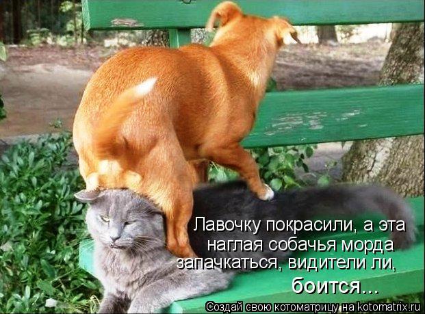 Котоматрица: Лавочку покрасили, а эта наглая собачья морда запачкаться, видители ли, боится...