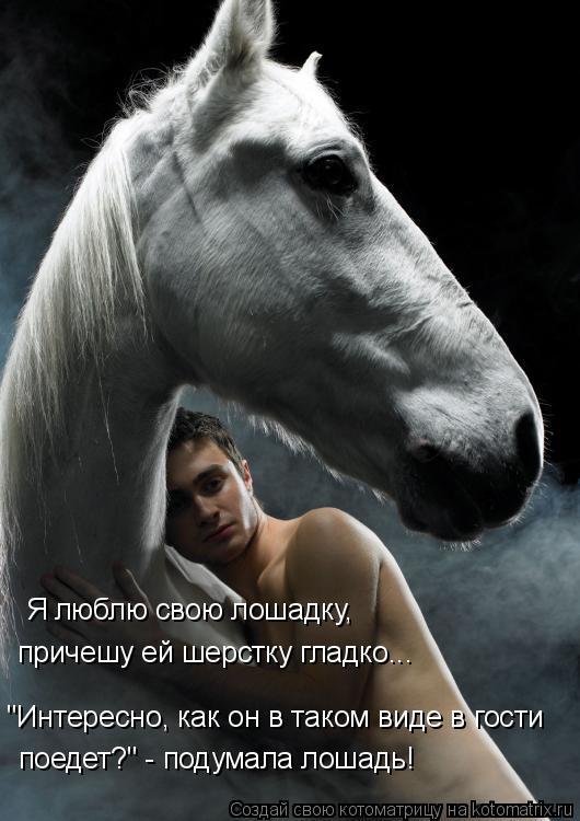 """Котоматрица: Я люблю свою лошадку,  причешу ей шерстку гладко... """"Интересно, как он в таком виде в гости  поедет?"""" - подумала лошадь!"""