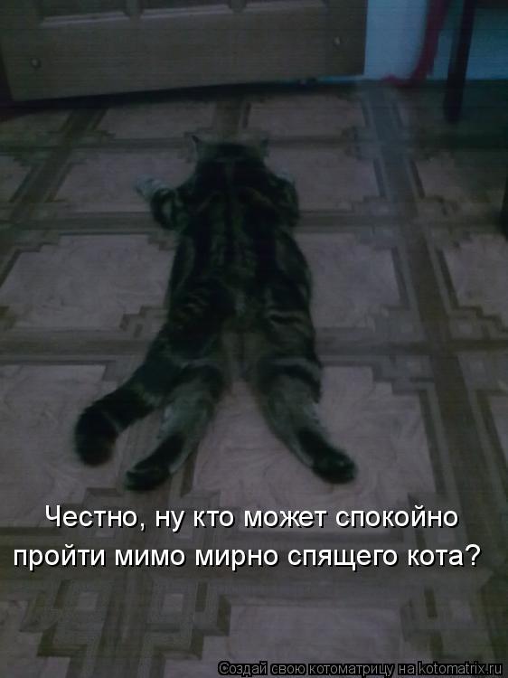 Котоматрица: Честно, ну кто может спокойно пройти мимо мирно спящего кота?