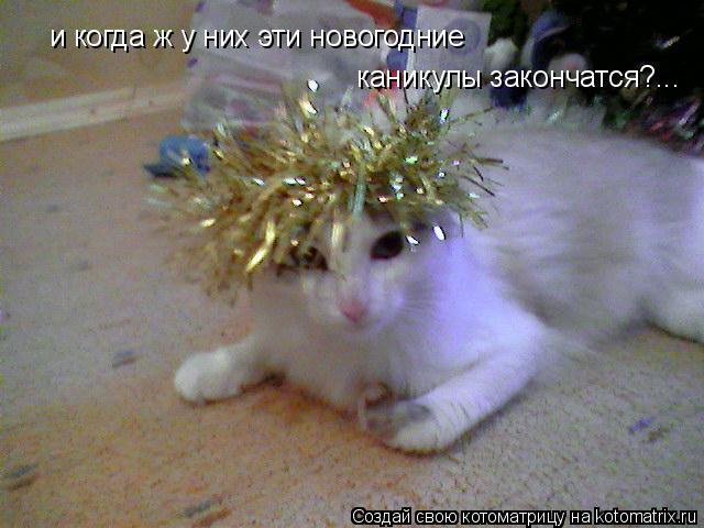 Котоматрица: и когда ж у них эти новогодние каникулы закончатся?...